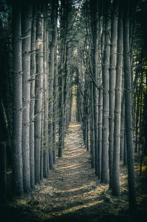 Tree Alley - Heatherae Photography