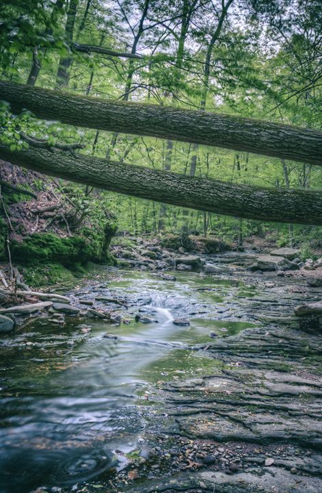 Two Fallen Trees - Heatherae Photography