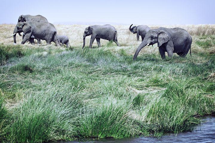 Elephants - Heatherae Photography