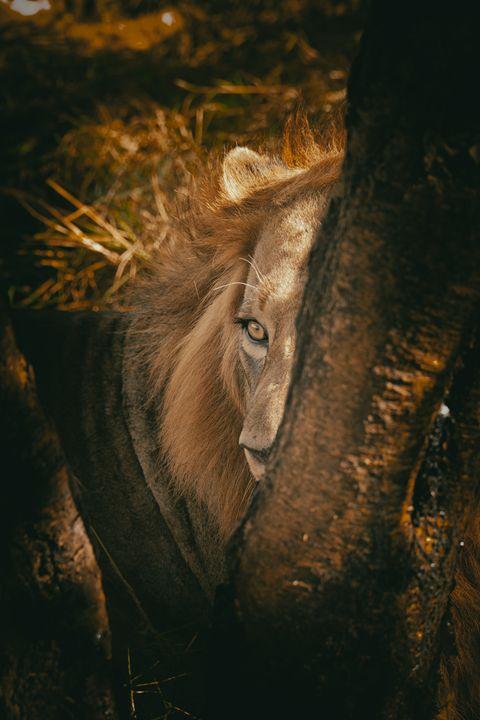 Hidden Lion - Seeking Venture Gallery