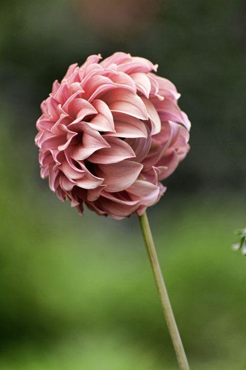 Lollipop Flower - Heatherae Photography