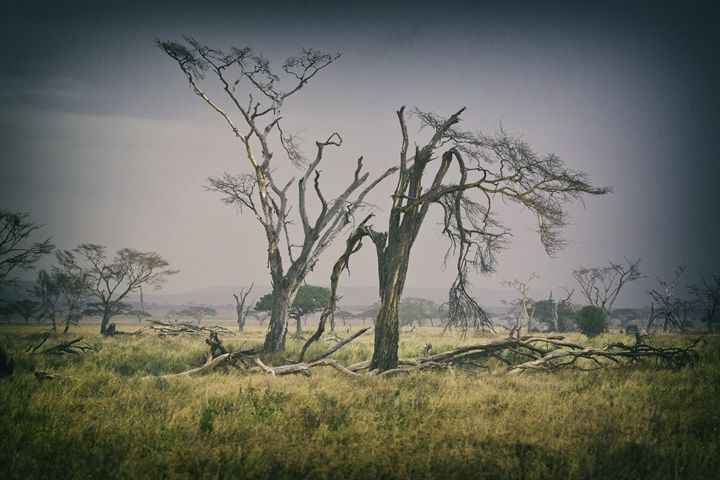 Serengeti Scene - Heatherae Photography