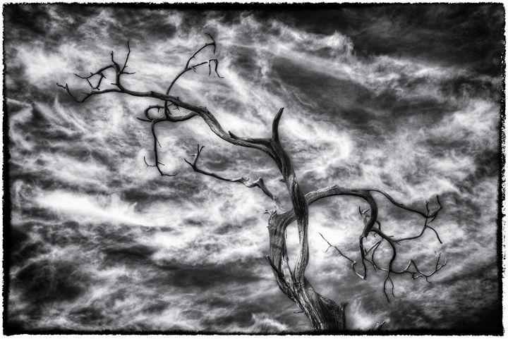 Spooky Tree - Heatherae Photography