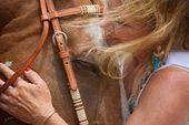 Julie Anderson Equine art
