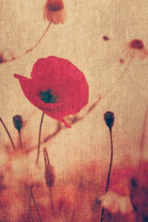 Poppies - Beautiful Stunning Art by Goodeyez