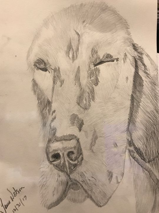 English setter in graphite - Spiritual Art by Laurie
