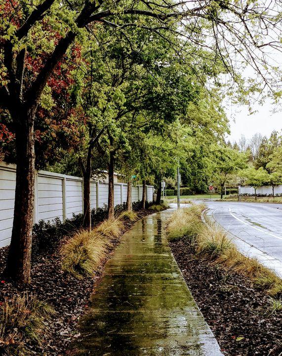 Autumn Path - Emily Gonzales