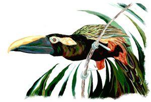 Toucan 9