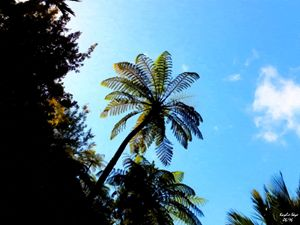 Fern in Summer Sky