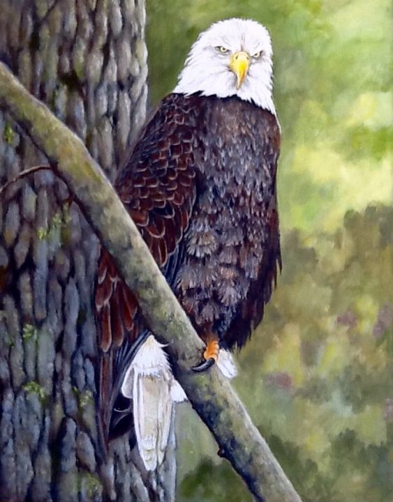 AMERICAN BOLD EAGLE.   Sold - Pam's Art