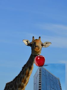 Giraffe with highrise building illus