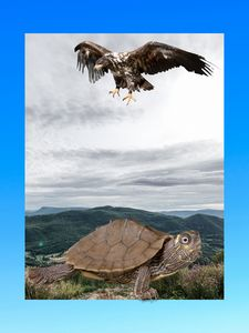 Eagle and turtle