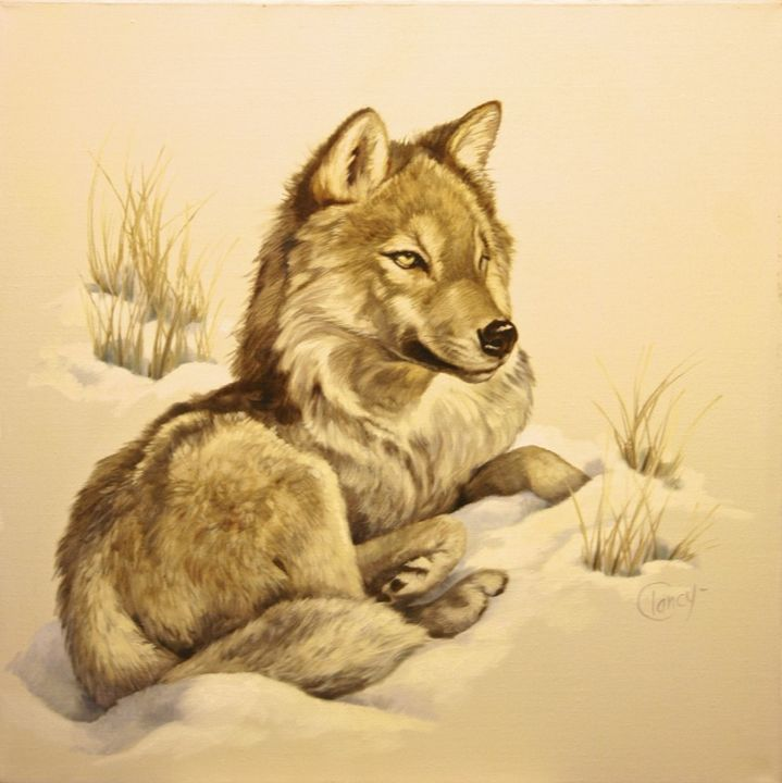 Wolf in Snow   30x30, 1983, $8 - Clancy Cherry  Wildlife Artist