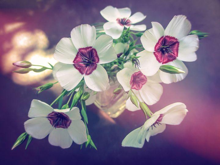 Bouquet of Flowers of Flax - Julia Gogol Art