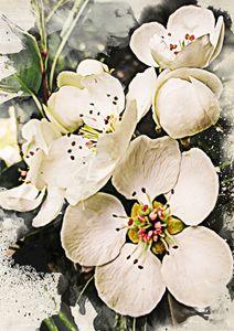 Pear White Flowers - Julia Gogol Art