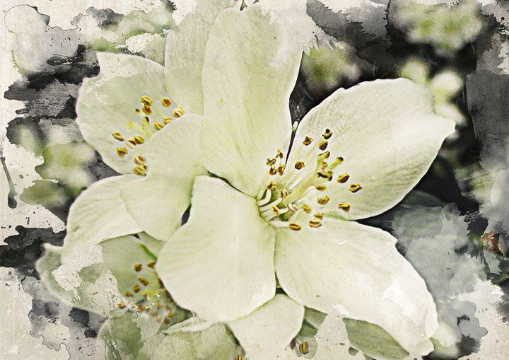 Jasmine flowers - Julia Gogol Art