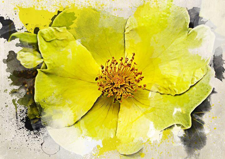 Yellow Wild Rose - Julia Gogol Art
