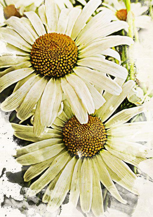 White Daisies - Julia Gogol Art