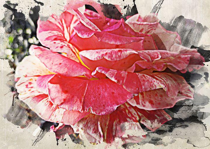 Pinkish Rose - Julia Gogol Art