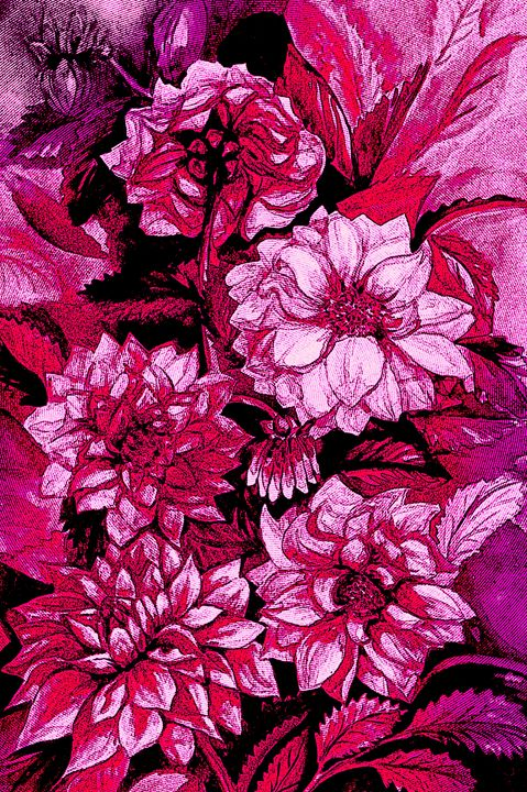 Chrysanthemums in purple - Julia Gogol Art