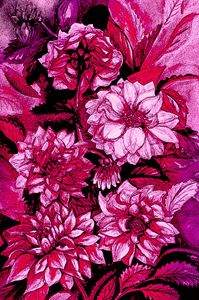 Chrysanthemums in purple