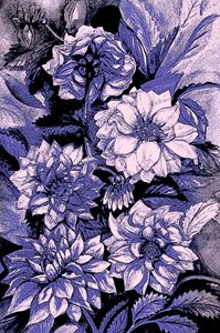 Chrysanthemums in violet