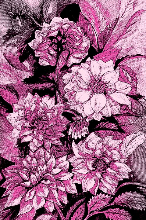 Chrysanthemums in pink - Julia Gogol Art