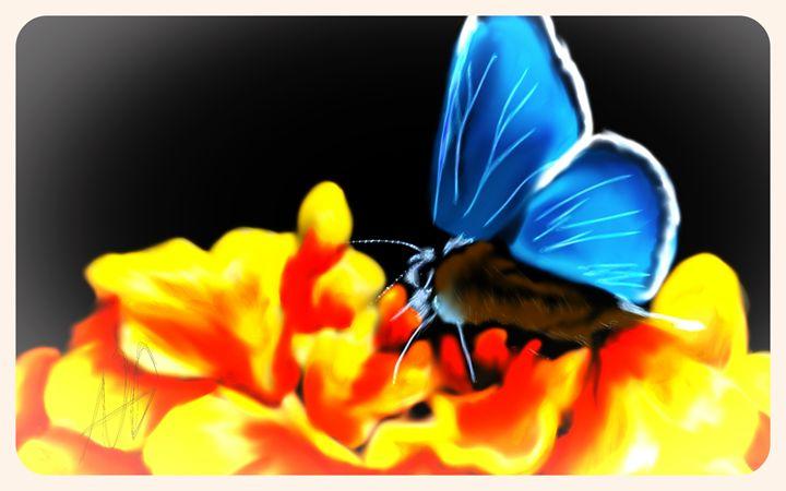 Moth - Ashley Hawkins