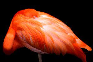 Flamingo Glow