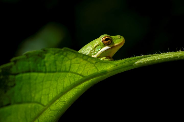 Day Dreaming Little Green Frog - Jarrett Art