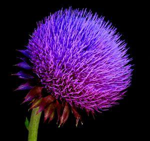Purple Wild - Jarrett Art