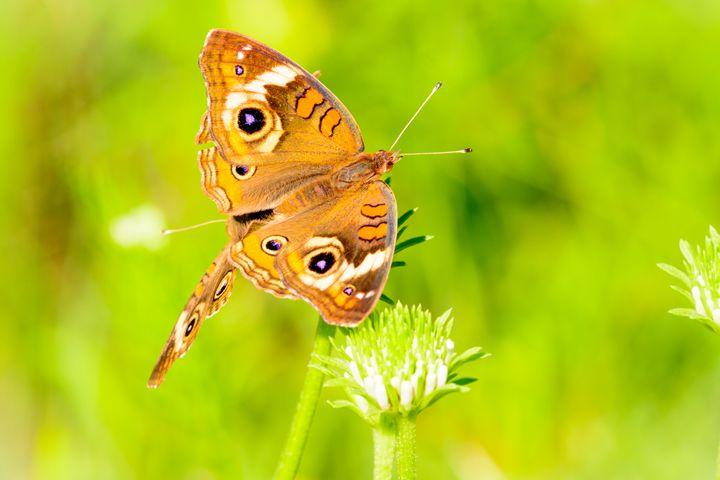 Butterfly Springtime - Jarrett Art