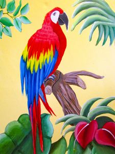 Sonny the Macaw