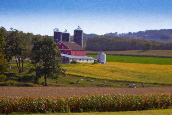 Colorful Dairy Farm in late summer - Peaceful Prints & Wall Murals