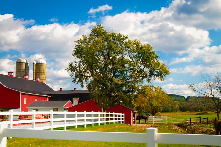Red Barns and White Fence - Peaceful Prints & Wall Murals