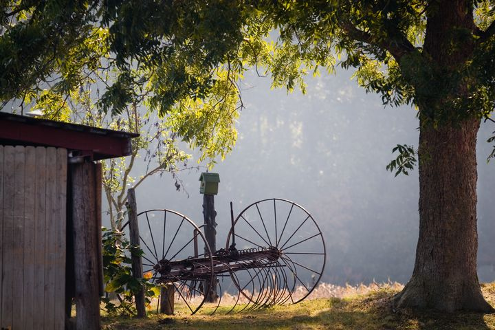 Hay Rake, Pecan Tree & Birdhouse - Peaceful Prints & Wall Murals