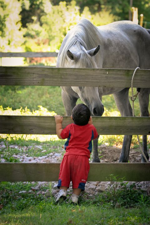 Boy and Horse Greet on the Farm - Peaceful Prints & Wall Murals