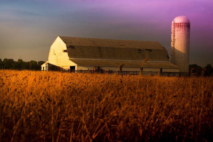 Nostalgic Dairy Barn in Wheat Field - Peaceful Prints & Wall Murals
