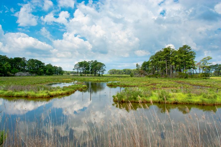 Assateague Island in Spring - Peaceful Prints & Wall Murals