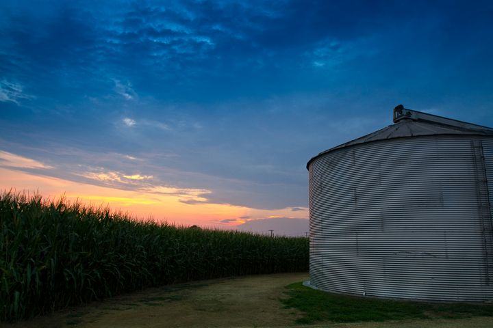 Silo and Cornfield at Sunset - Peaceful Prints & Wall Murals