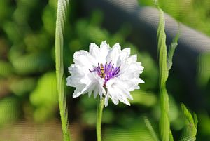White flower and fly