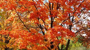 Fall Tree Color