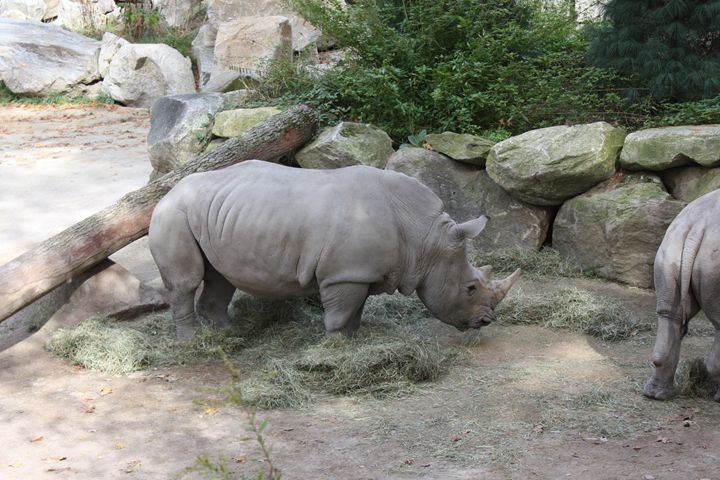 Rhinoceros - SUHANYA