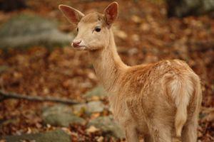 A beautiful deer