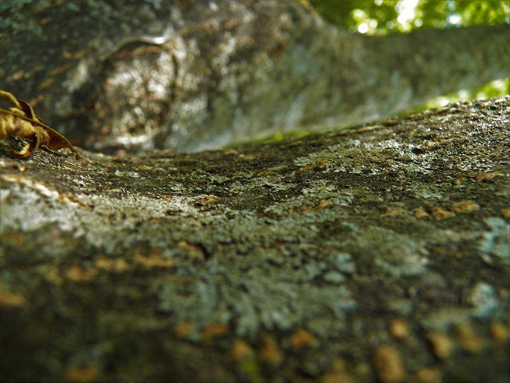 Looking up at a Tree - JV Art