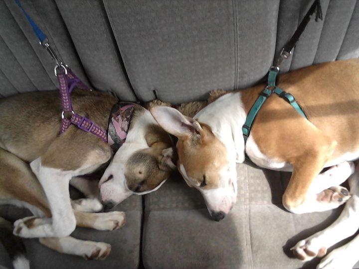 Puppy Love - Amanda H.
