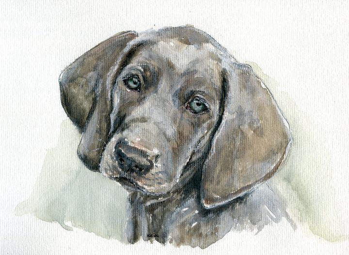 Weimaraner puppy - Joyce Kleine