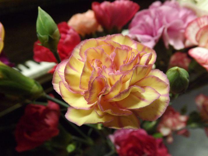 Blushing Petals - Lorna Kay