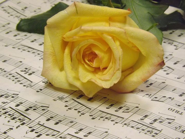 Classical Rose - Lorna Kay