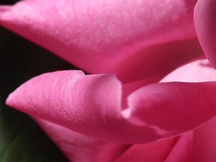 Pink Curl - Lorna Kay